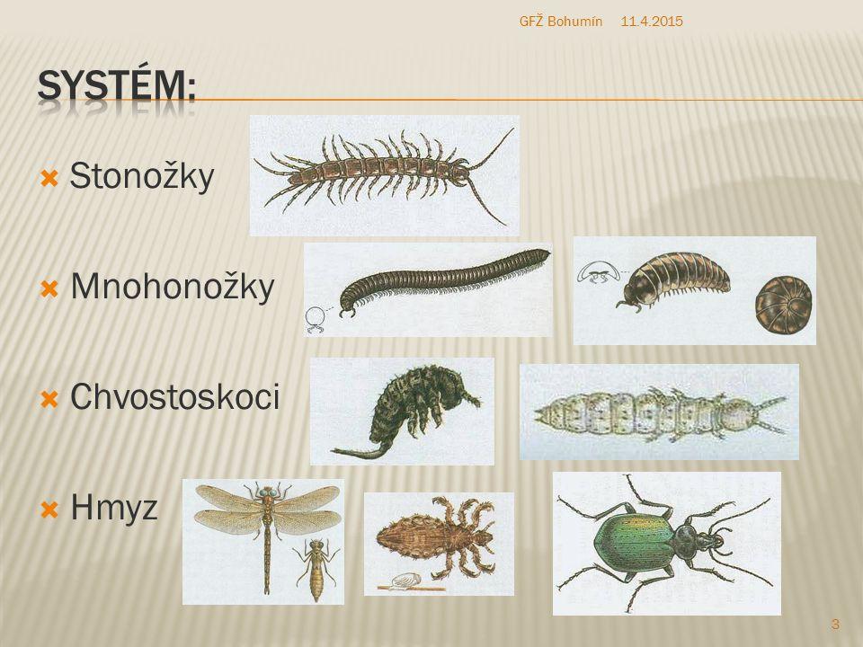  Stonožky  Mnohonožky  Chvostoskoci  Hmyz 11.4.2015 3 GFŽ Bohumín