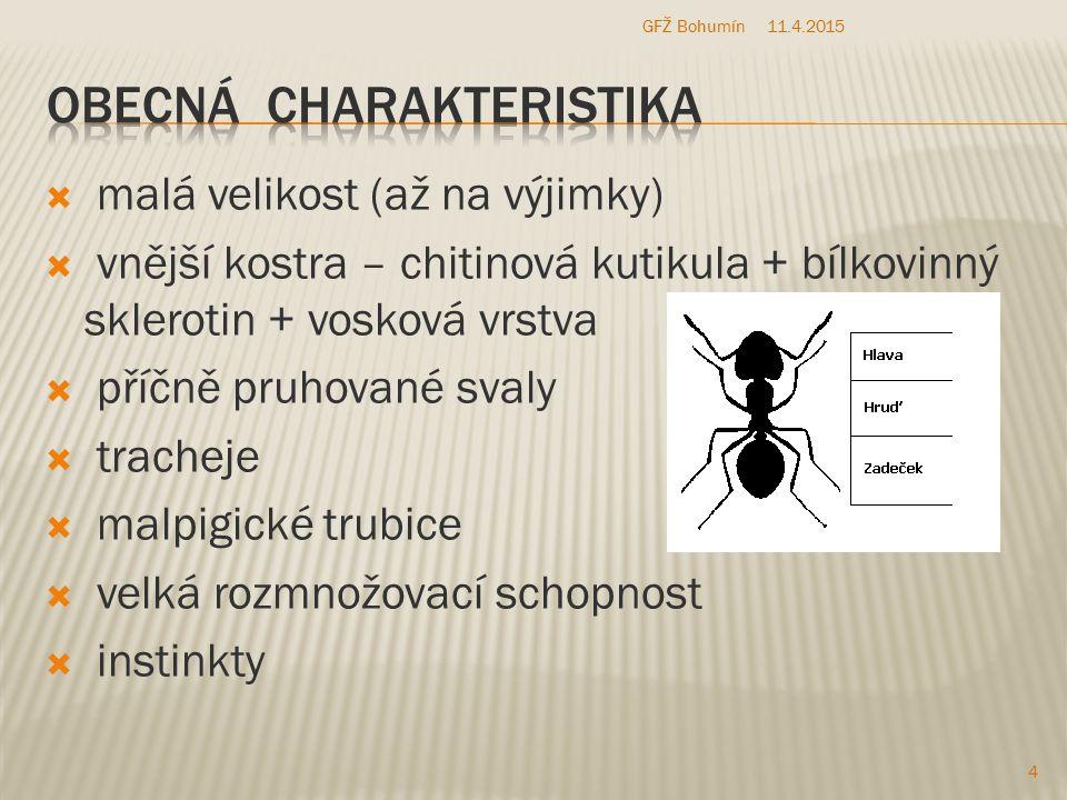 kudlanky 11.4.2015 15 GFŽ Bohumín