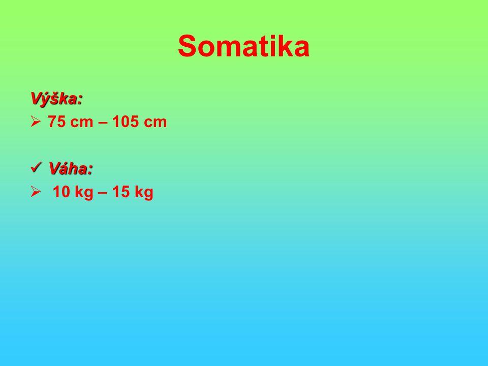 Somatika Výška:  75 cm – 105 cm Váha: Váha:  10 kg – 15 kg