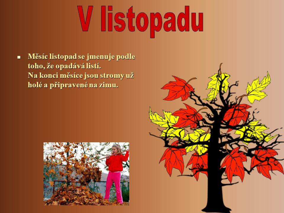Měsíc listopad se jmenuje podle toho, že opadává listí. Na konci měsíce jsou stromy už holé a připravené na zimu. Měsíc listopad se jmenuje podle toho