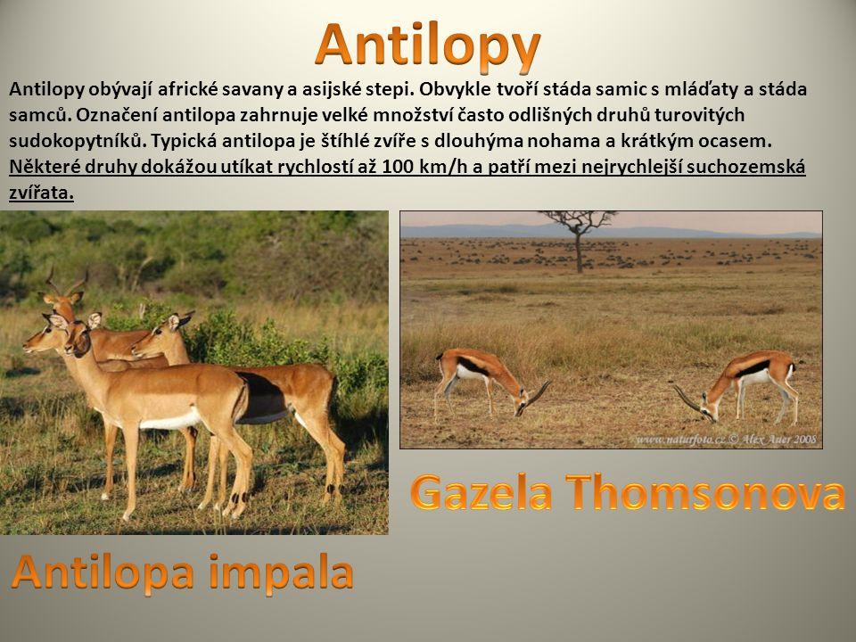 Antilopy obývají africké savany a asijské stepi. Obvykle tvoří stáda samic s mláďaty a stáda samců. Označení antilopa zahrnuje velké množství často od