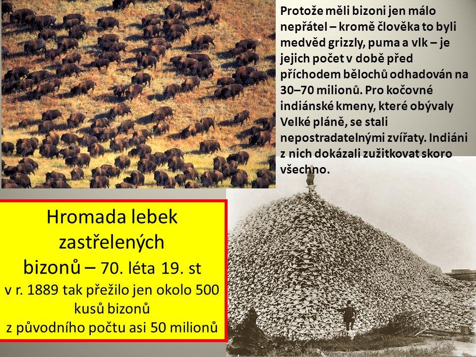 Hromada lebek zastřelených bizonů – 70. léta 19. st v r. 1889 tak přežilo jen okolo 500 kusů bizonů z původního počtu asi 50 milionů Protože měli bizo