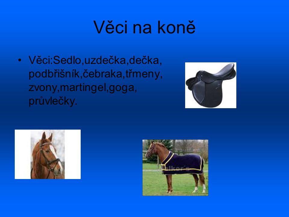 Věci na koně Věci:Sedlo,uzdečka,dečka, podbřišník,čebraka,třmeny, zvony,martingel,goga, průvlečky.