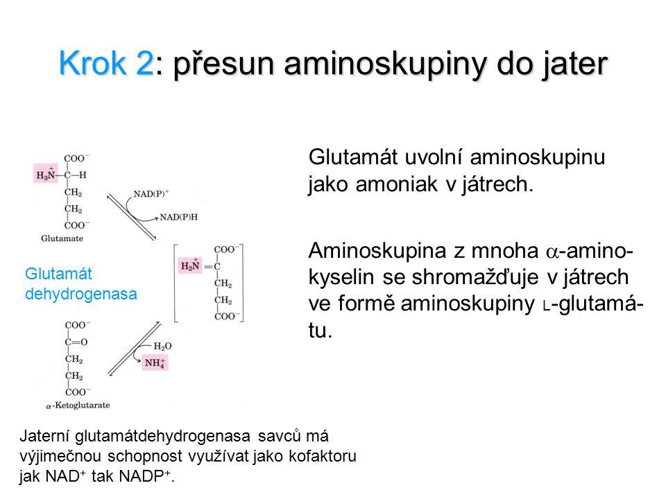 Krok 2: přesun aminoskupiny do jater Glutamát dehydrogenasa Jaterní glutamátdehydrogenasa savců má výjimečnou schopnost využívat jako kofaktoru jak NA