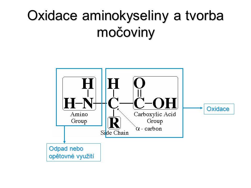 Oxidace aminokyseliny a tvorba močoviny Odpad nebo opětovné využití Oxidace