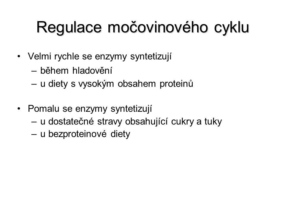 Regulace močovinového cyklu Velmi rychle se enzymy syntetizují –během hladovění –u diety s vysokým obsahem proteinů Pomalu se enzymy syntetizují –u do