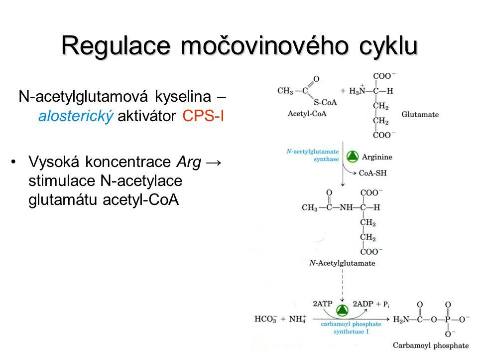 Regulace močovinového cyklu N-acetylglutamová kyselina – alosterický aktivátor CPS-I Vysoká koncentrace Arg → stimulace N-acetylace glutamátu acetyl-C