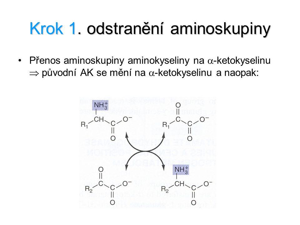 Krok 1. odstranění aminoskupiny Přenos aminoskupiny aminokyseliny na  -ketokyselinu  původní AK se mění na  -ketokyselinu a naopak: