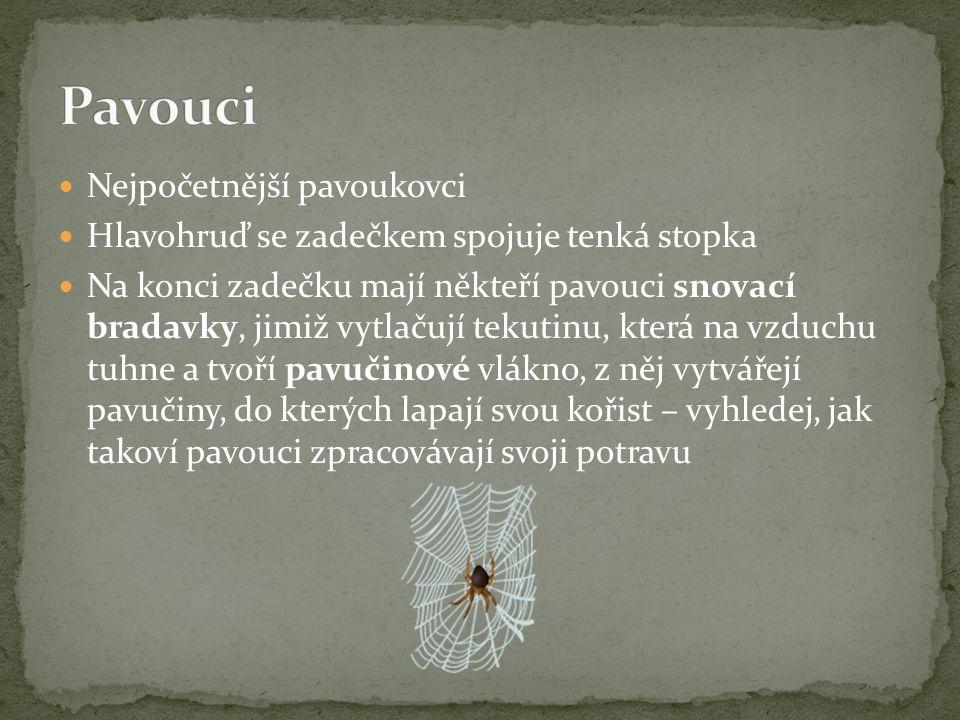 Nejpočetnější pavoukovci Hlavohruď se zadečkem spojuje tenká stopka Na konci zadečku mají někteří pavouci snovací bradavky, jimiž vytlačují tekutinu, která na vzduchu tuhne a tvoří pavučinové vlákno, z něj vytvářejí pavučiny, do kterých lapají svou kořist – vyhledej, jak takoví pavouci zpracovávají svoji potravu