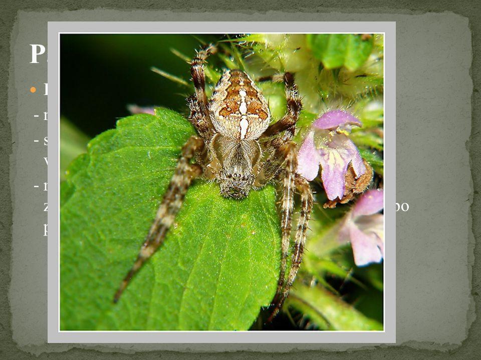 Křižák obecný - náš nejznámější pavouk - staví svislé pavučiny na plotech, keřích nebo mezi větvemi stromů - má 8 oček, klepítka, makadla, kráčivé nohy jsou zakončeny hřebínky, pomocí kterých se pohybuje po pavučině