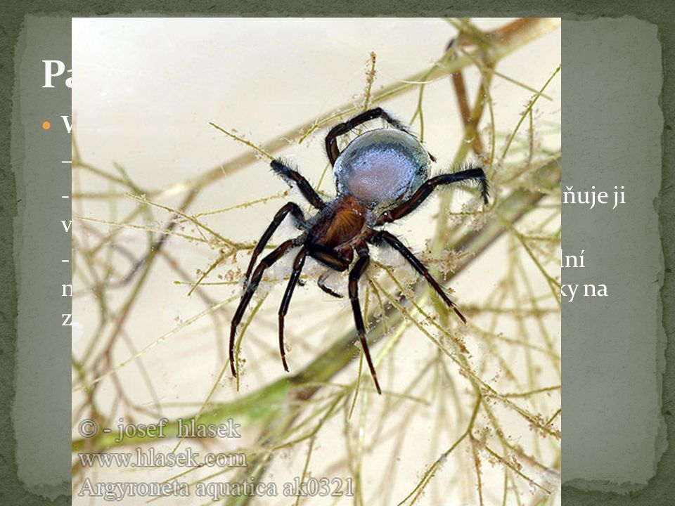 Vodouch stříbřitý – jediný pavouk žijící pod vodou - ve vodě spřádá pavučinu ve tvaru zvonu a naplňuje ji vzduchem - dýchá vzdušný kyslík – vystrkuje