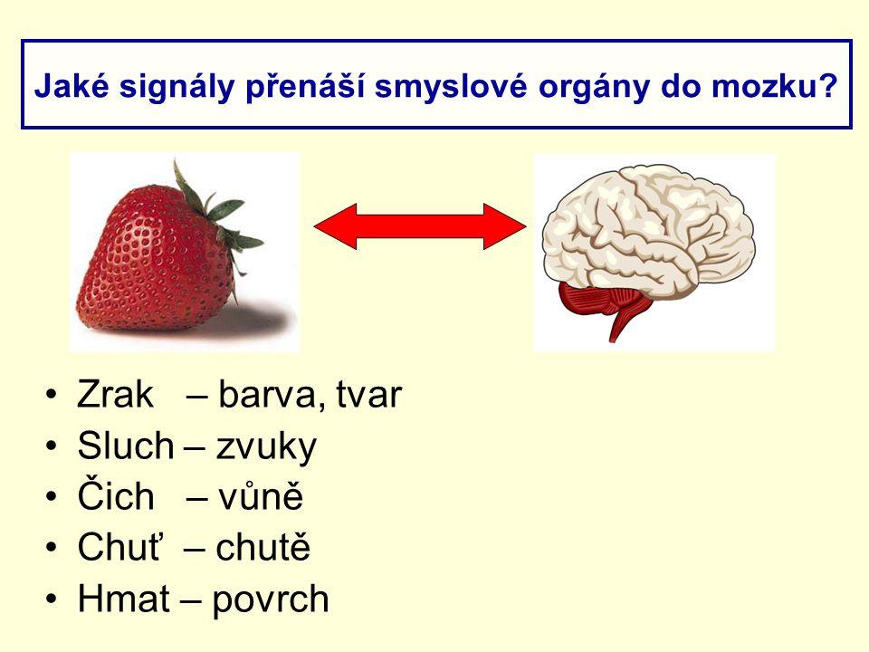 Zrak – barva, tvar Sluch – zvuky Čich – vůně Chuť – chutě Hmat – povrch Jaké signály přenáší smyslové orgány do mozku?