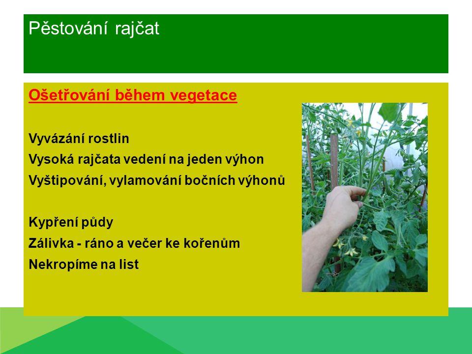 Pěstování rajčat Ošetřování během vegetace Vyvázání rostlin Vysoká rajčata vedení na jeden výhon Vyštipování, vylamování bočních výhonů Kypření půdy Z