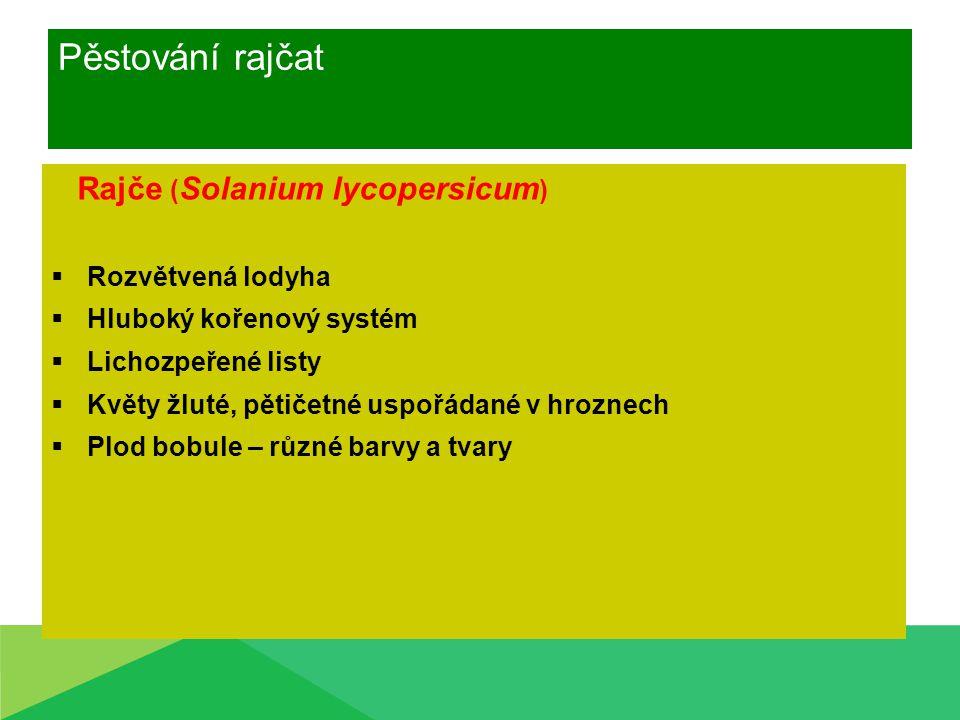 Pěstování rajčat Rajče ( Solanium lycopersicum )  Rozvětvená lodyha  Hluboký kořenový systém  Lichozpeřené listy  Květy žluté, pětičetné uspořádan
