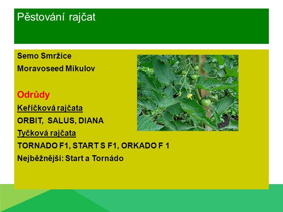 Pěstování rajčat Semo Smržice Moravoseed Mikulov Odrůdy Keříčková rajčata ORBIT, SALUS, DIANA Tyčková rajčata TORNADO F1, START S F1, ORKADO F 1 Nejbě