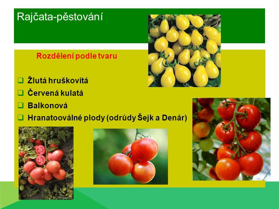 Rajčata-pěstování Rozdělení podle tvaru  Žlutá hruškovitá  Červená kulatá  Balkonová  Hranatooválné plody (odrůdy Šejk a Denár)