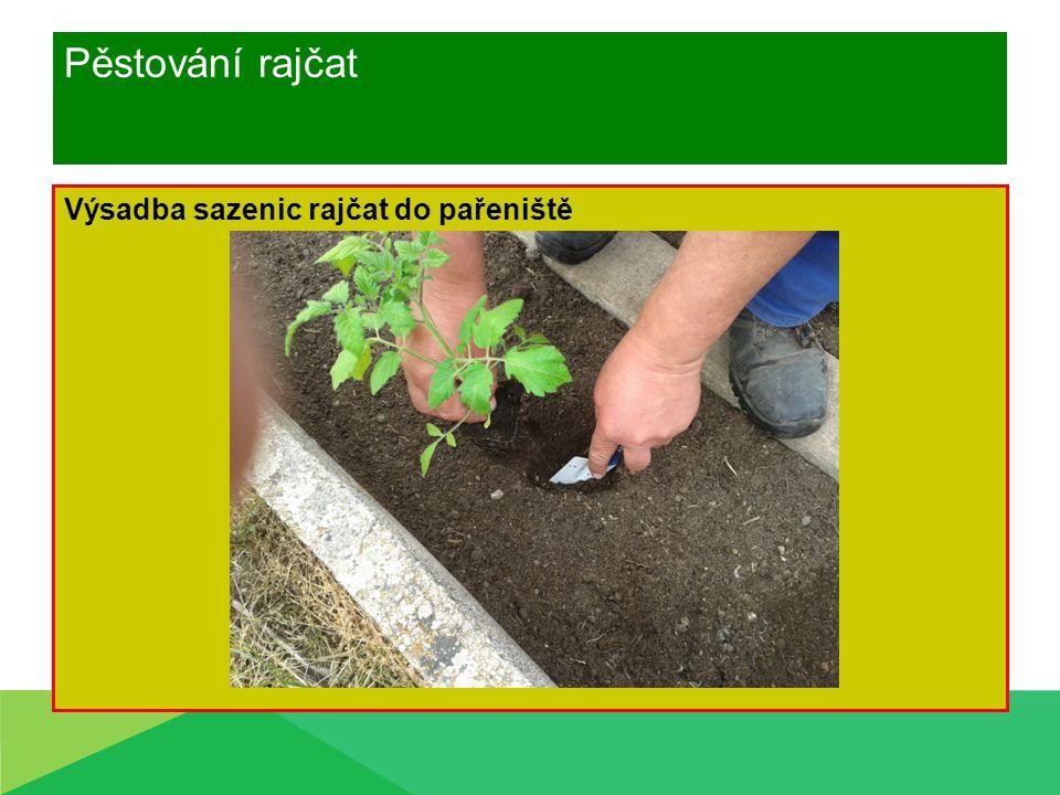 Pěstování rajčat Ošetřování během vegetace Vyvázání rostlin Vysoká rajčata vedení na jeden výhon Vyštipování, vylamování bočních výhonů Kypření půdy Zálivka - ráno a večer ke kořenům Nekropíme na list