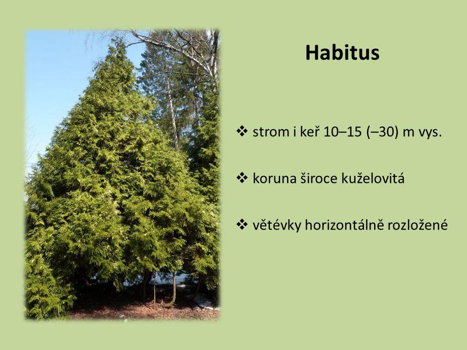 Habitus  strom i keř 10–15 (–30) m vys.  koruna široce kuželovitá  větévky horizontálně rozložené