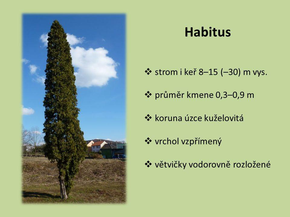 Habitus  strom i keř 8–15 (–30) m vys.  průměr kmene 0,3–0,9 m  koruna úzce kuželovitá  vrchol vzpřímený  větvičky vodorovně rozložené