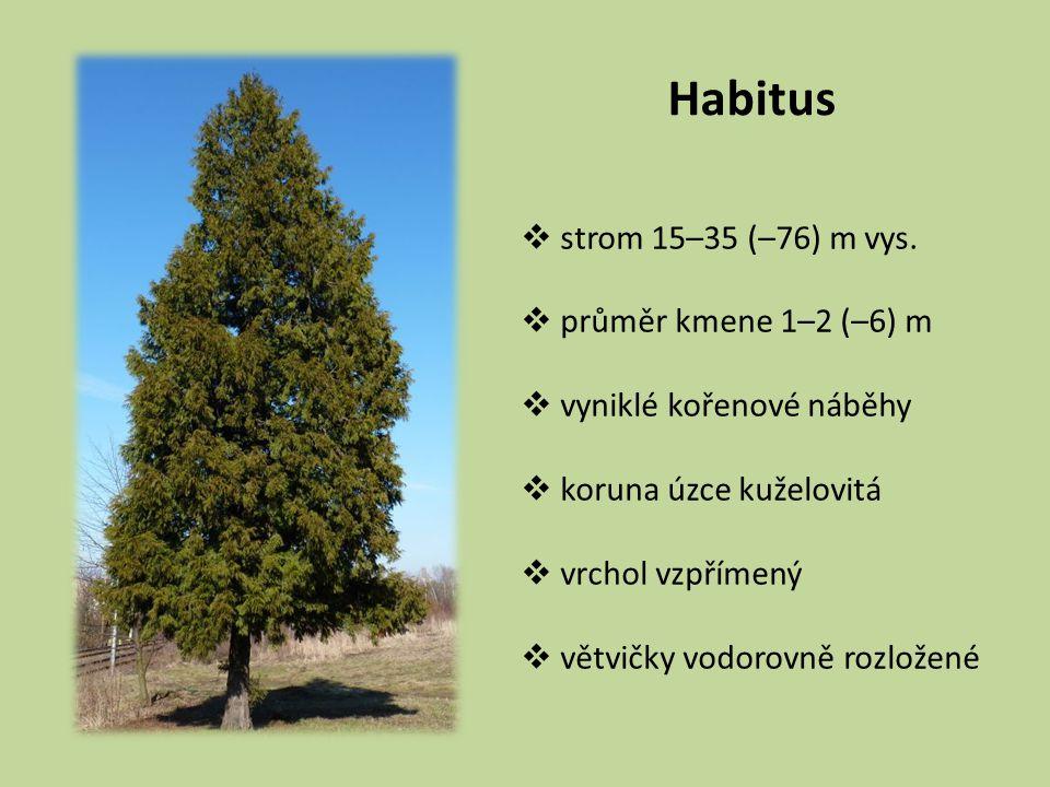 Habitus  strom 15–35 (–76) m vys.  průměr kmene 1–2 (–6) m  vyniklé kořenové náběhy  koruna úzce kuželovitá  vrchol vzpřímený  větvičky vodorovn