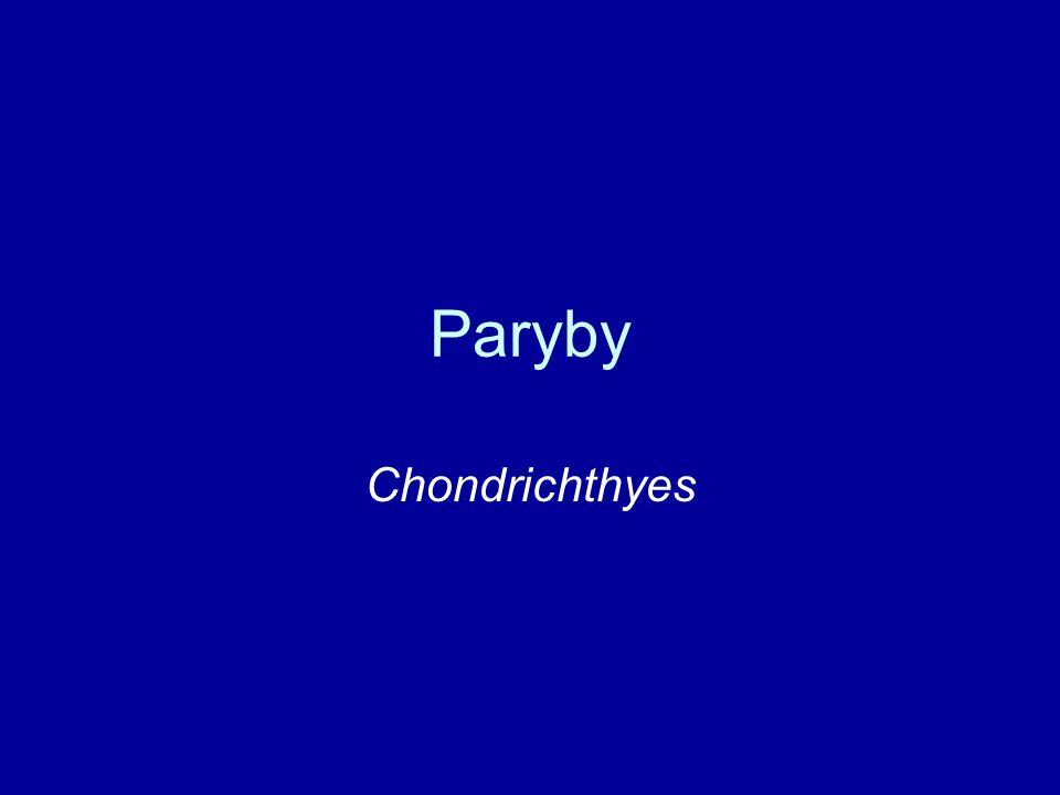 Paryby Chondrichthyes