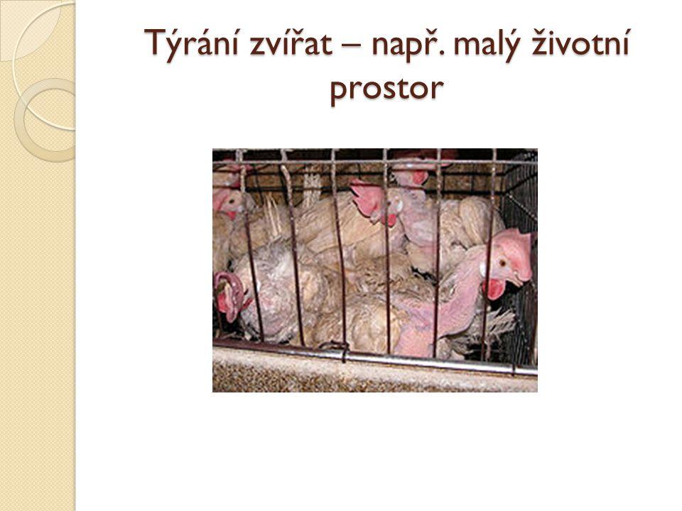 Týrání zvířat – např. malý životní prostor