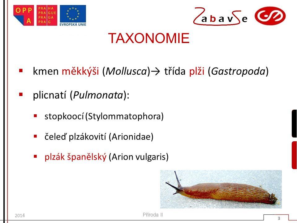 TAXONOMIE  kmen měkkýši (Mollusca)→ třída plži (Gastropoda)  plicnatí (Pulmonata):  stopkoocí (Stylommatophora)  čeleď plzákovití (Arionidae)  plzák španělský (Arion vulgaris) Příroda II 3 201 4
