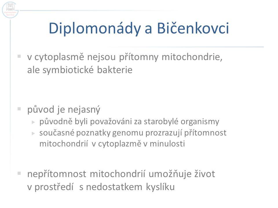 Diplomonády a Bičenkovci  v cytoplasmě nejsou přítomny mitochondrie, ale symbiotické bakterie  původ je nejasný  původně byli považováni za staroby