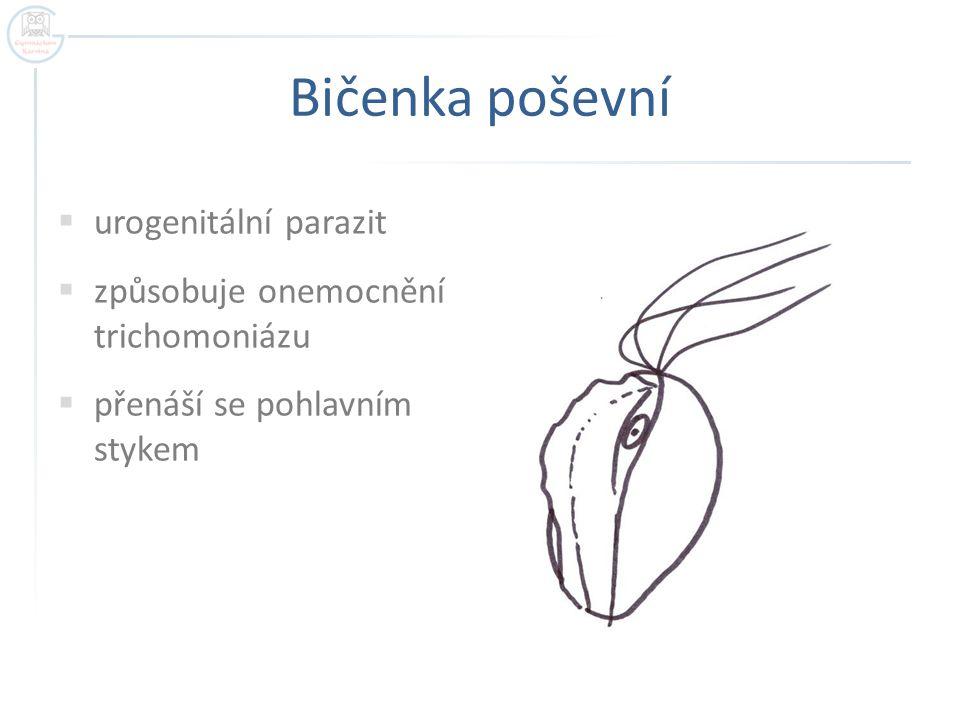 """Trypanosoma spavičná  krevní a tkáňový parazit  původce """"spavé nemoci  přenašečem je moucha TSE-TSE  patří do skupiny Bodalky  rezervoár v přírodě → prase undulující membrána"""