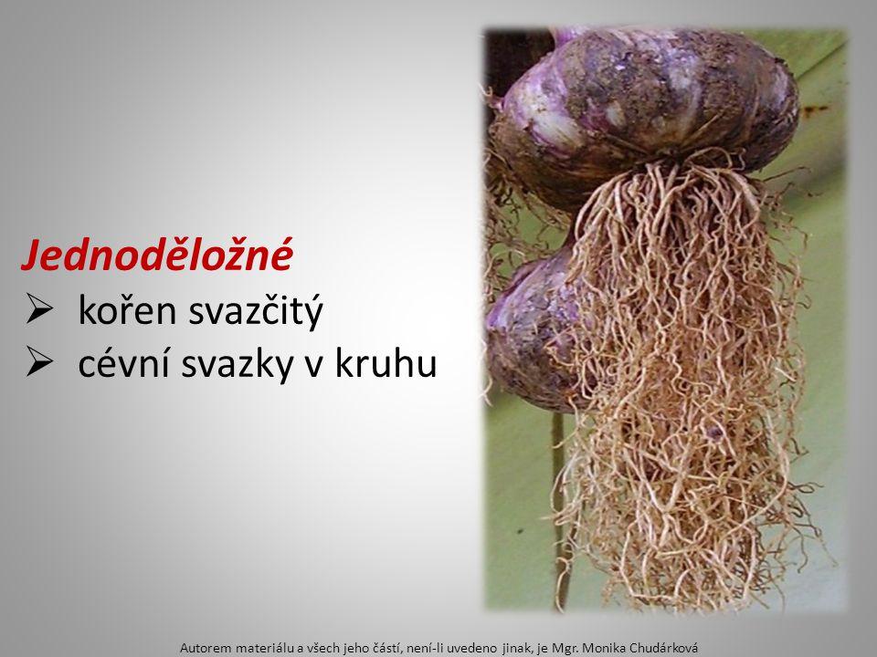 Dvouděložné  2 dělohy v semeni, většina rostlin  květy 5 (4) četné Autorem materiálu a všech jeho částí, není-li uvedeno jinak, je Mgr.