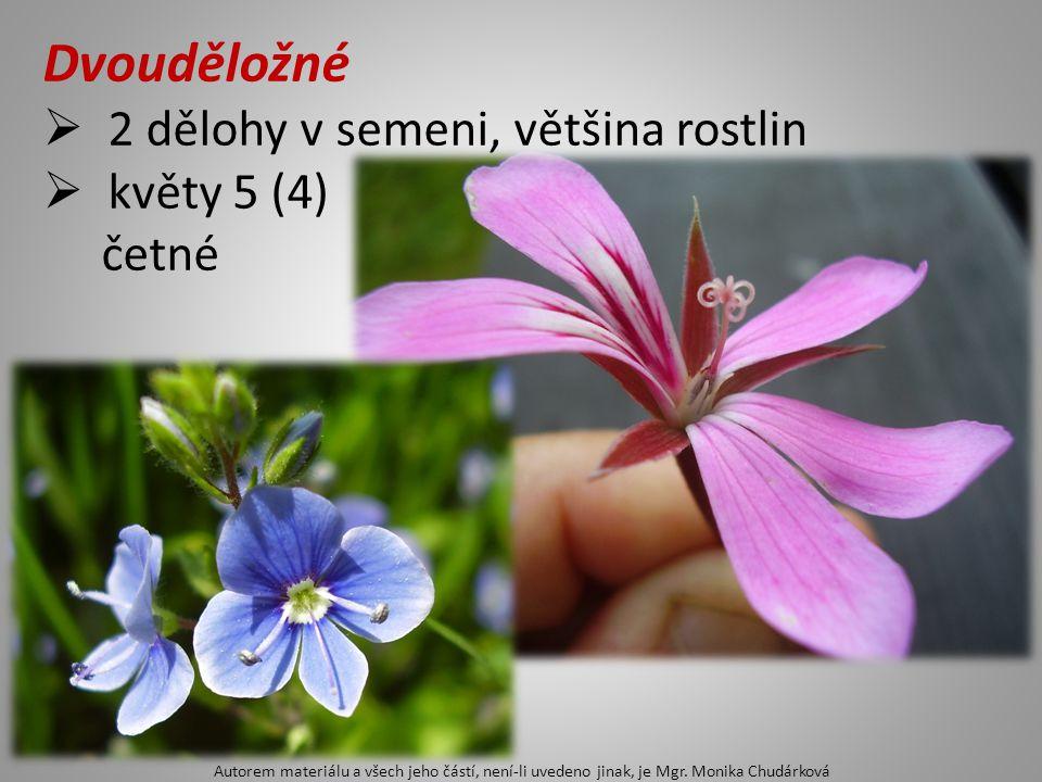 Dvouděložné  2 dělohy v semeni, většina rostlin  květy 5 (4) četné Autorem materiálu a všech jeho částí, není-li uvedeno jinak, je Mgr. Monika Chudá