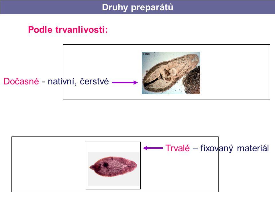 Podle trvanlivosti: Druhy preparátů Trvalé – fixovaný materiál Dočasné - nativní, čerstvé Druhy preparátů