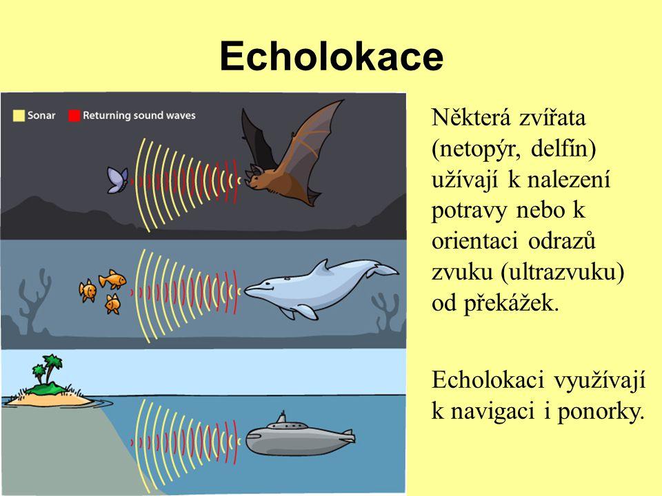 Echolokace Některá zvířata (netopýr, delfín) užívají k nalezení potravy nebo k orientaci odrazů zvuku (ultrazvuku) od překážek. Echolokaci využívají k