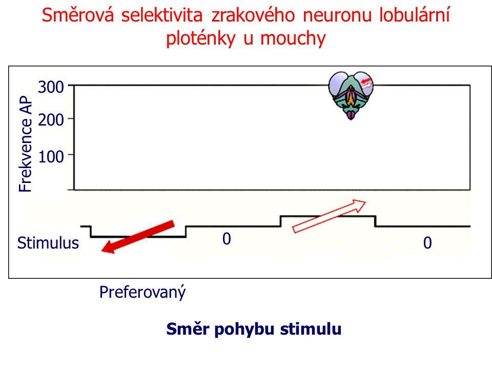 Směrová selektivita zrakového neuronu lobulární ploténky u mouchy Frekvence AP 100 200 300 Stimulus Preferovaný Směr pohybu stimulu 0 0