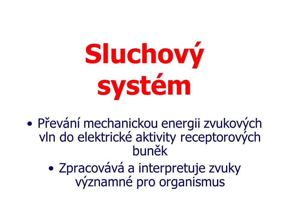 Sluchový systém Převání mechanickou energii zvukových vln do elektrické aktivity receptorových buněk Zpracovává a interpretuje zvuky významné pro orga