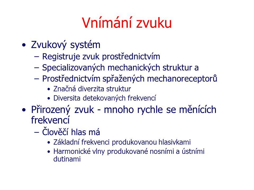 Vnímání zvuku Zvukový systém –Registruje zvuk prostřednictvím –Specializovaných mechanických struktur a –Prostřednictvím spřažených mechanoreceptorů Z