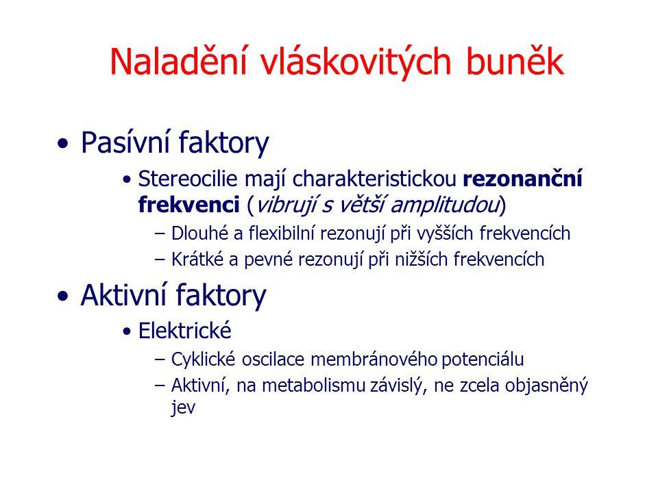 Naladění vláskovitých buněk Pasívní faktory Stereocilie mají charakteristickou rezonanční frekvenci (vibrují s větší amplitudou) –Dlouhé a flexibilní