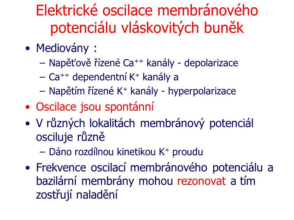 Elektrické oscilace membránového potenciálu vláskovitých buněk Mediovány : –Napěťově řízené Ca ++ kanály - depolarizace –Ca ++ dependentní K + kanály