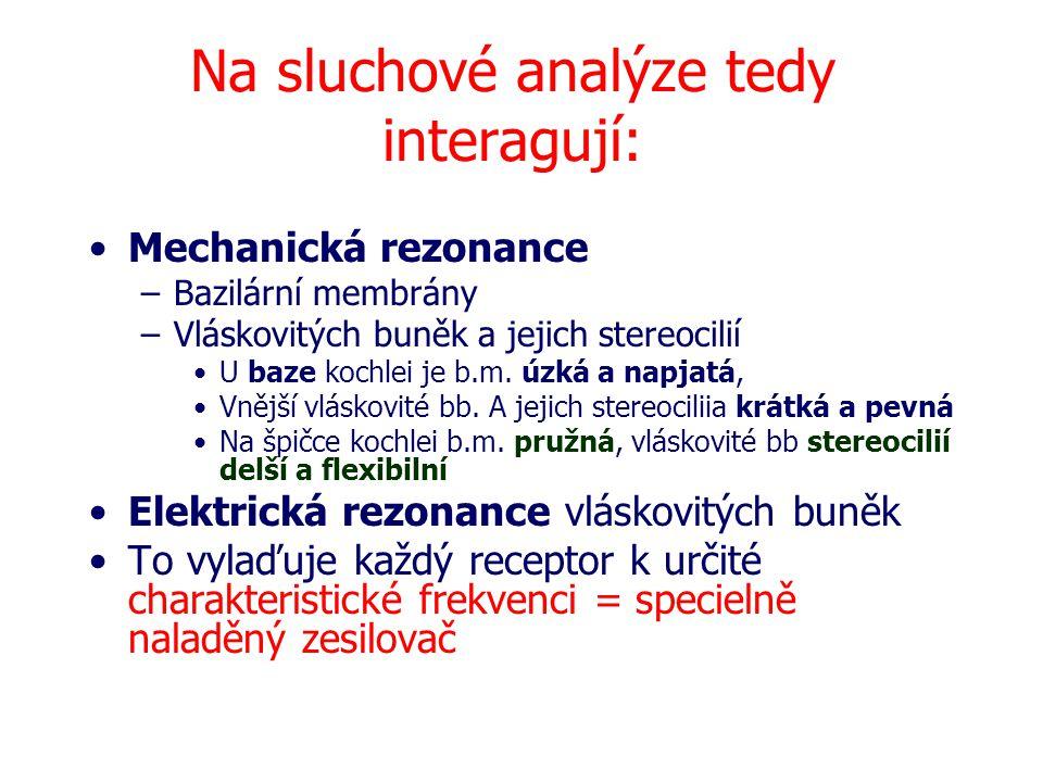 Na sluchové analýze tedy interagují: Mechanická rezonance –Bazilární membrány –Vláskovitých buněk a jejich stereocilií U baze kochlei je b.m. úzká a n