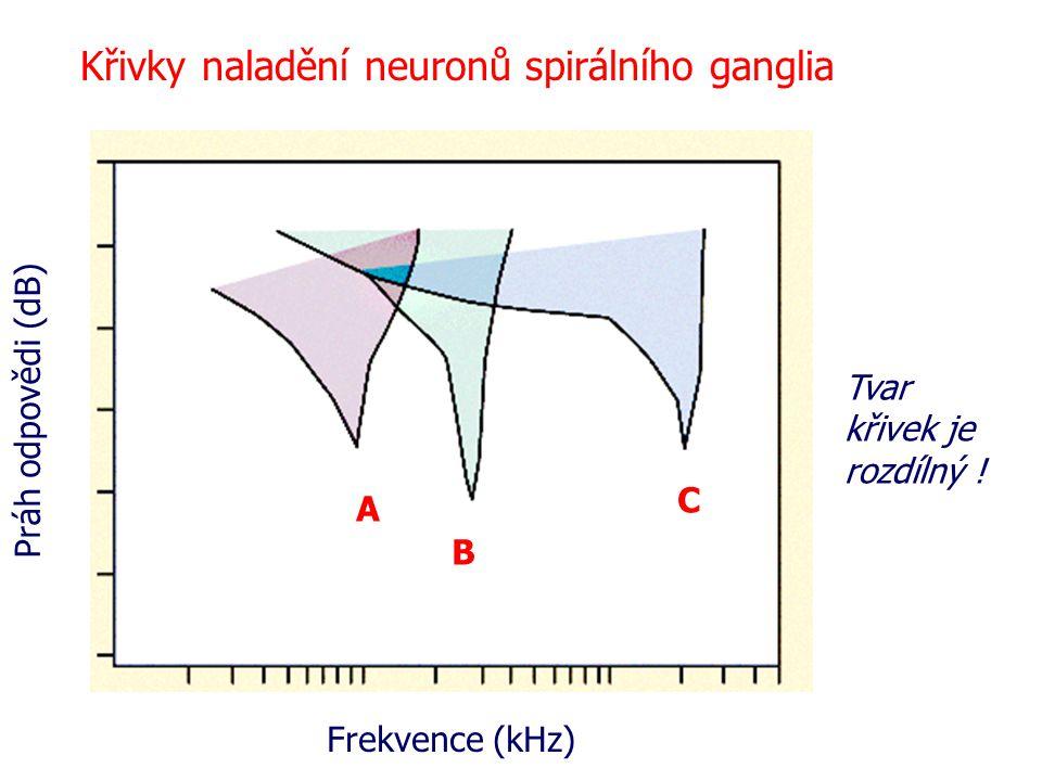 Frekvence (kHz) Práh odpovědi (dB) A B C Křivky naladění neuronů spirálního ganglia Tvar křivek je rozdílný !