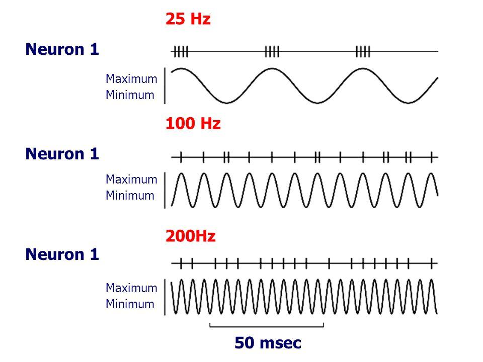 Maximum Minimum Maximum Minimum Maximum Minimum 25 Hz 100 Hz 200Hz 50 msec Neuron 1