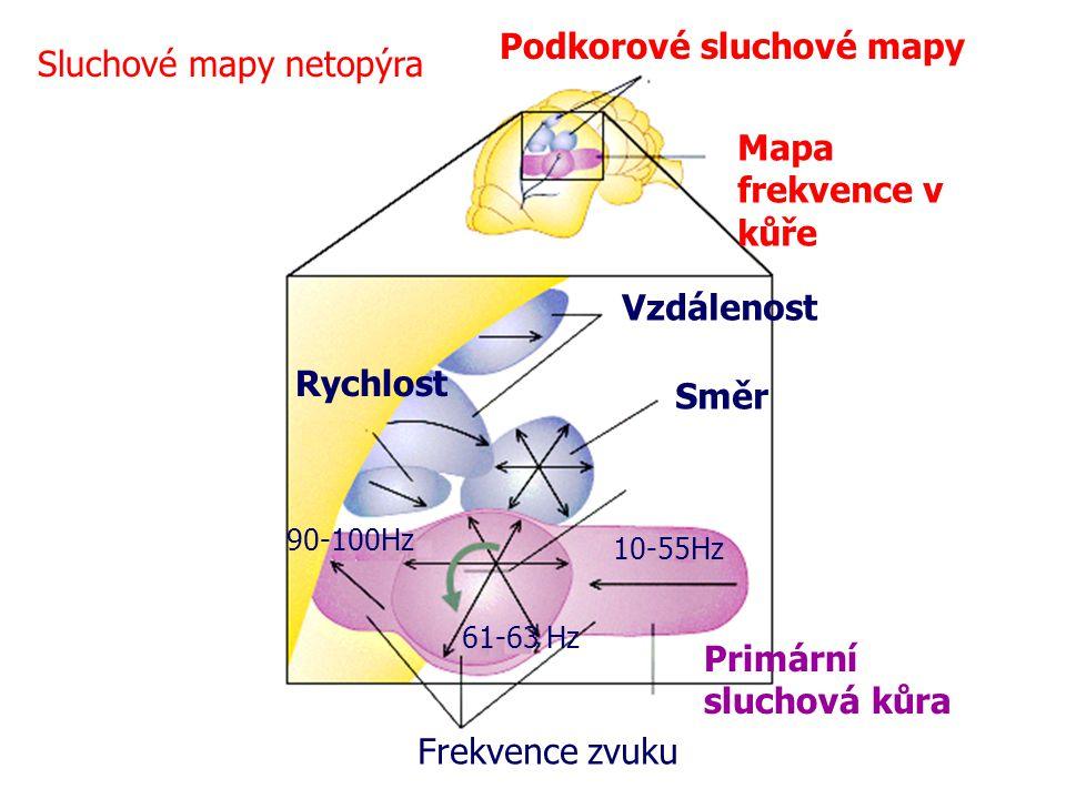 10-55Hz 61-63 Hz 90-100Hz Frekvence zvuku Primární sluchová kůra Vzdálenost Rychlost Směr Podkorové sluchové mapy Mapa frekvence v kůře Sluchové mapy