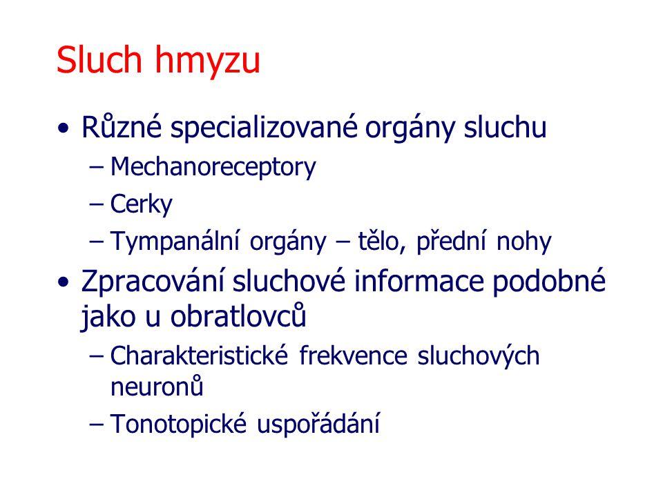 Sluch hmyzu Různé specializované orgány sluchu –Mechanoreceptory –Cerky –Tympanální orgány – tělo, přední nohy Zpracování sluchové informace podobné j