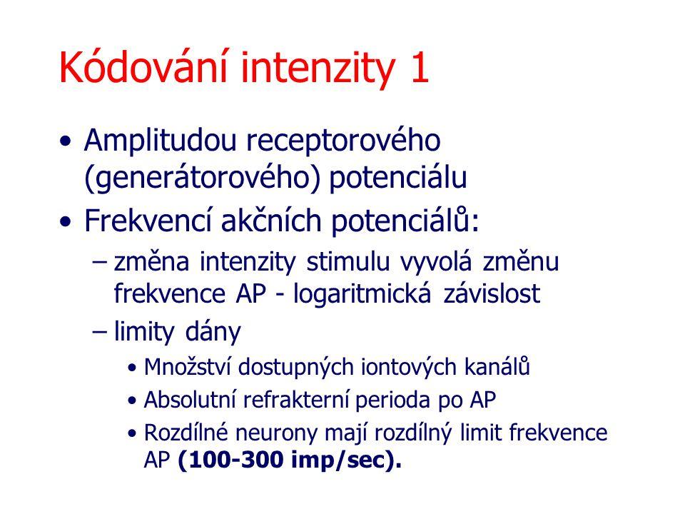 Kódování intenzity 1 Amplitudou receptorového (generátorového) potenciálu Frekvencí akčních potenciálů: –změna intenzity stimulu vyvolá změnu frekvenc
