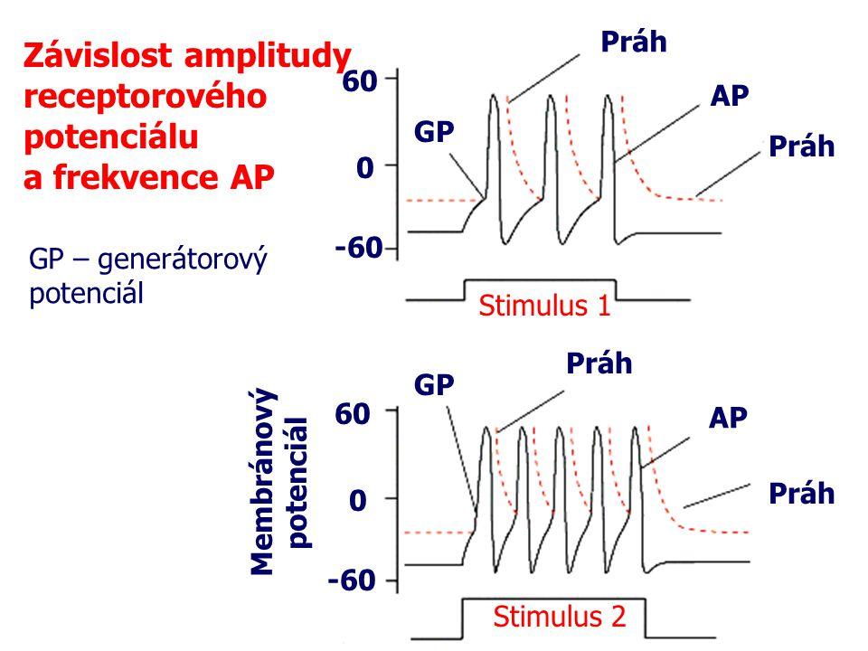 Závislost amplitudy receptorového potenciálu a frekvence AP 60 0 -60 60 0 -60 Membránový potenciál Stimulus 1 Stimulus 2 GP GP – generátorový potenciá