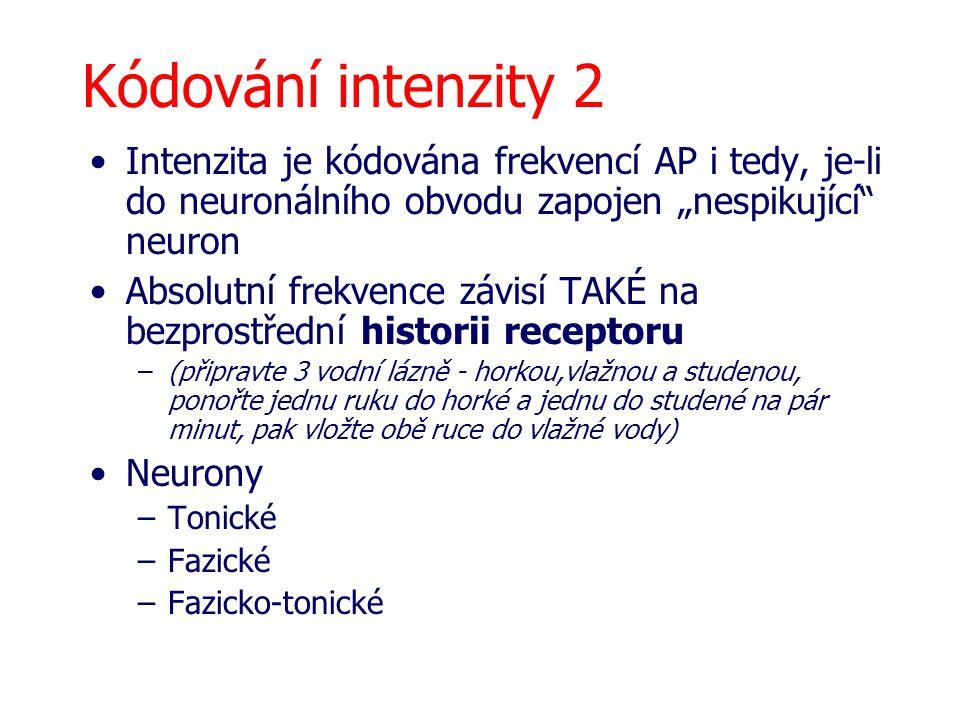 """Kódování intenzity 2 Intenzita je kódována frekvencí AP i tedy, je-li do neuronálního obvodu zapojen """"nespikující"""" neuron Absolutní frekvence závisí T"""