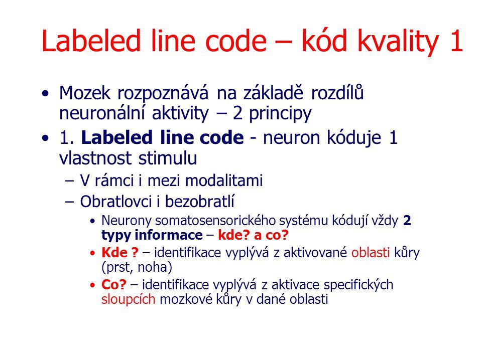Labeled line code – kód kvality 1 Mozek rozpoznává na základě rozdílů neuronální aktivity – 2 principy 1. Labeled line code - neuron kóduje 1 vlastnos