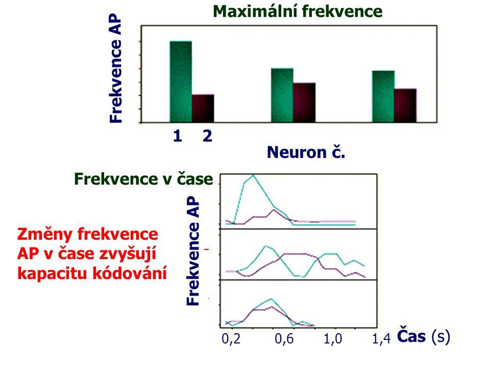 1 2 GeraniolLinalool Rajče Geraniol Linalo ol Rajče Čas (s) Frekvence AP 0,2 0,6 1,0 1,4 Frekvence AP 1 2 Neuron č. Maximální frekvence Frekvence v ča