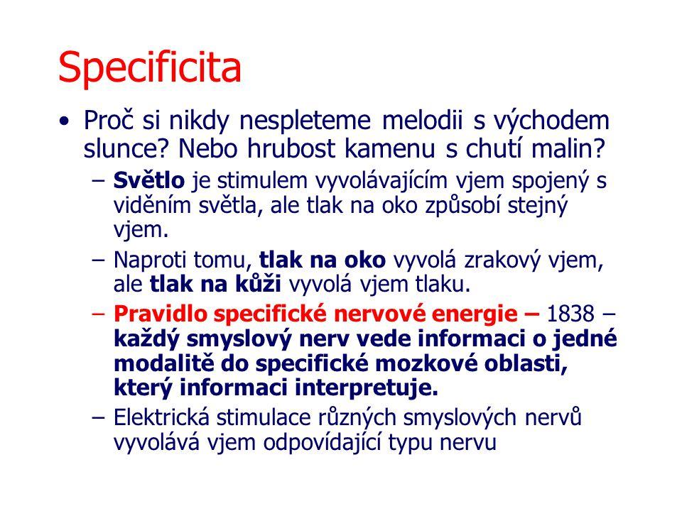 Bodová reprezentace (projekce) smyslových oblastí do mozku Somatotopie Retinotopie Tonotopie Chemotopie –Mozková jádra (přepojovací stanice) –Kůra