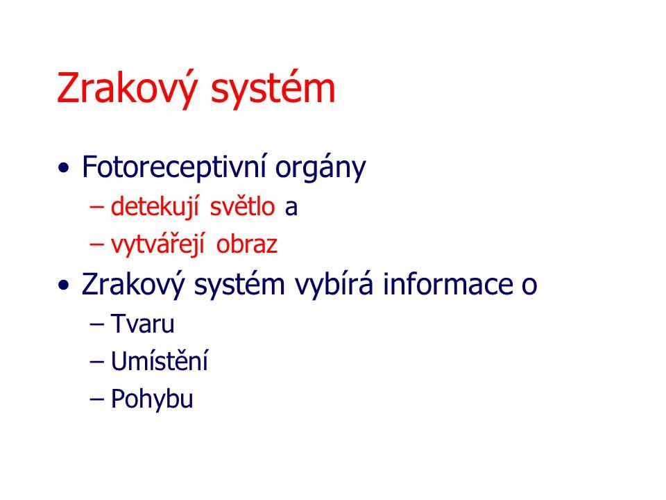 Fotoreceptivní orgány –detekují světlo a –vytvářejí obraz Zrakový systém vybírá informace o –Tvaru –Umístění –Pohybu